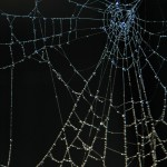 Michelle writes on Spider Silk