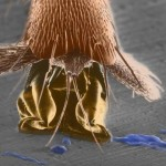 David's recent article on the function of the fluid found on insects' feet